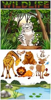 Animales salvajes en la selva