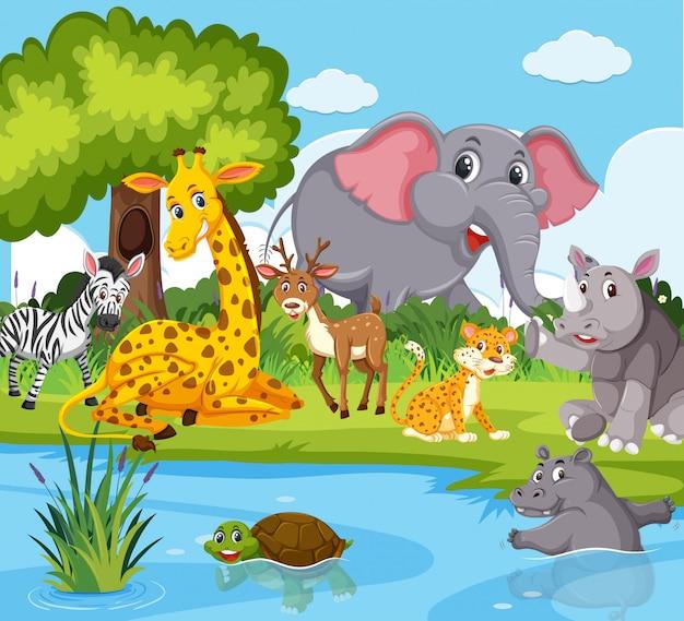 Animales salvajes que viven al lado del río