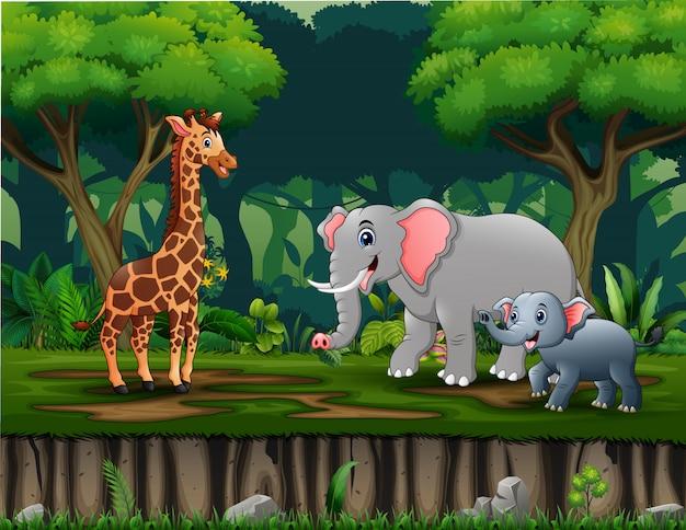 Animales salvajes que viven en la selva