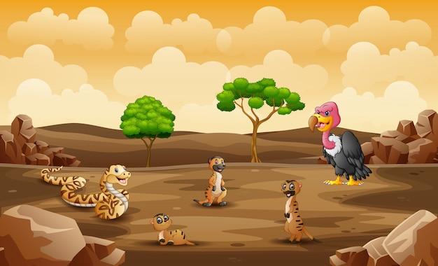 Animales salvajes que viven en una tierra seca