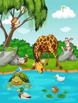 Animales salvajes por el rio
