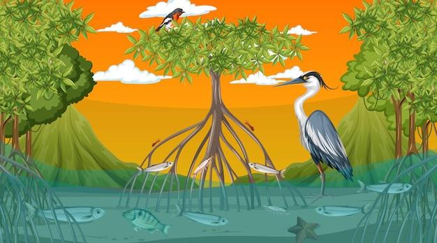 Los animales viven en el bosque de manglares en la escena del atardecer