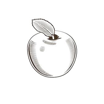 Apple en estilo vintage. ilustración de arte lineal