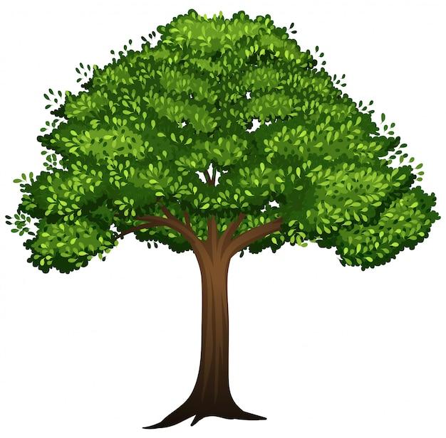 Un árbol aislado en el fondo blanco