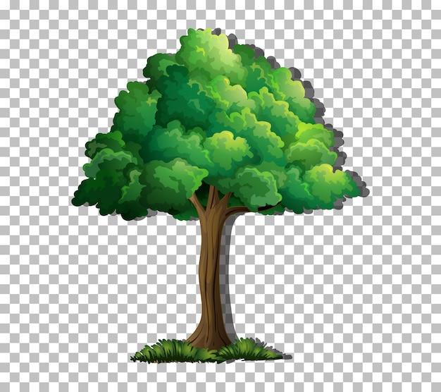 Un árbol aislado sobre fondo transparente