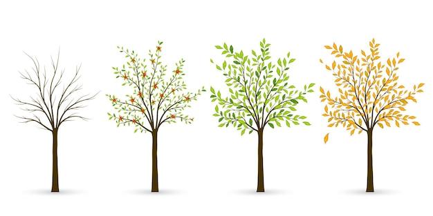 Árbol en cuatro estaciones: invierno, primavera, verano, otoño. ilustración vectorial