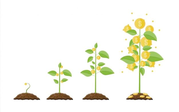 Árbol de dinero en crecimiento. etapas de crecimiento.