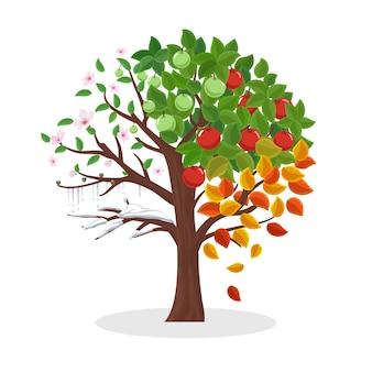 Árbol de estaciones. primavera verano otoño e invierno, planta de hoja, nieve y flor, ilustración vectorial