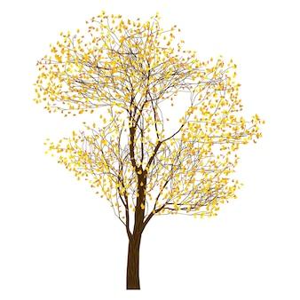 Árbol con follaje otoñal, árbol sobre fondo blanco, ilustración vectorial