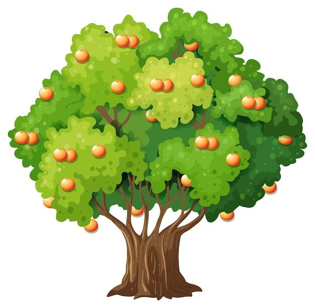 Árbol frutal naranja en estilo de dibujos animados en blanco