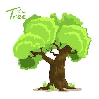 Árbol de hoja caduca en cuatro estaciones: primavera, verano, otoño e invierno.