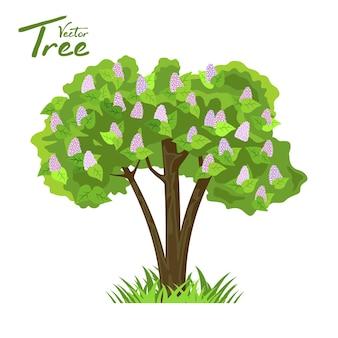 Árbol de hoja caduca en cuatro estaciones.
