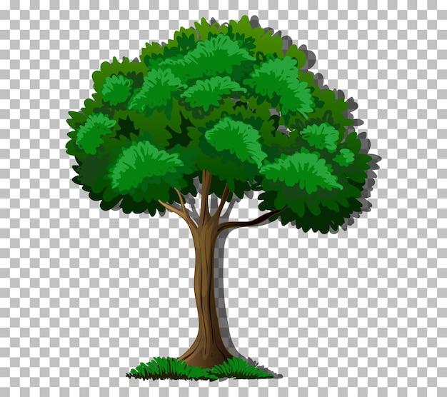 Un árbol con hojas verdes sobre fondo transparente