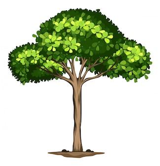 Un árbol idolato sobre fondo blanco.