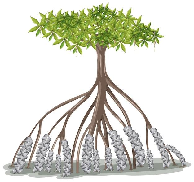 Árbol de mangle en estilo de dibujos animados sobre fondo blanco