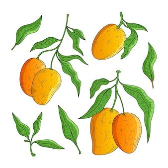 Árbol de mango botánico