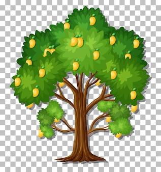 Árbol de mango sobre fondo transparente