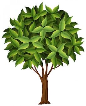 Un árbol de la naturaleza sobre fondo blanco