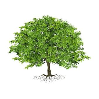 Árbol realista aislado sobre fondo blanco