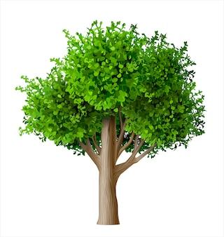 Árbol realista vector con hojas