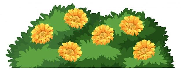Un arbusto de flores aisladas