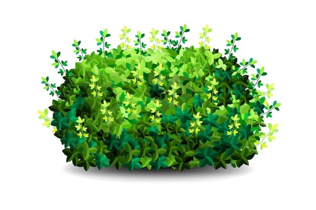Arbusto de jardín. arbustos de vegetación jardín verde