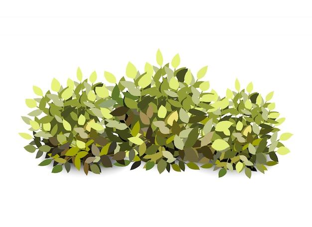 Arbusto de jardín verde abstracto