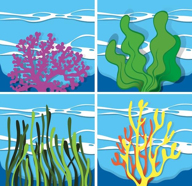 Arrecife de coral bajo el mar