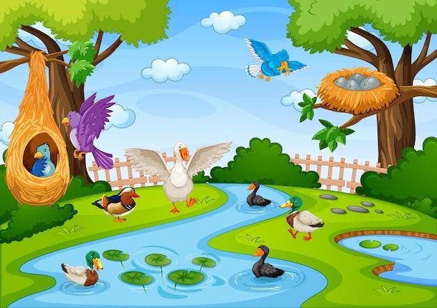 Arroyo en la escena del bosque con muchas aves.