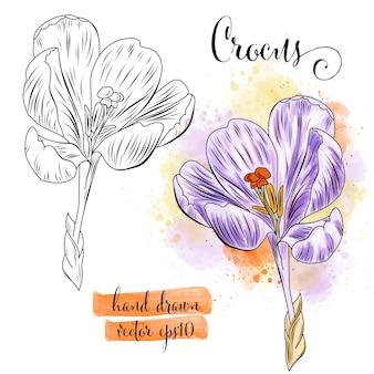 Arte botánico acuarela flor de azafrán