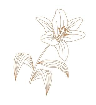 Arte de contorno de ilustración de flor de lirio.