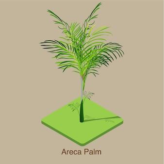 Arte isométrico del vector 3d de la palma de areca.