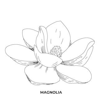 Arte de línea de ilustración de magnolia