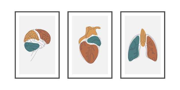 Arte de pared de una sola línea de cerebro, corazón y pulmón