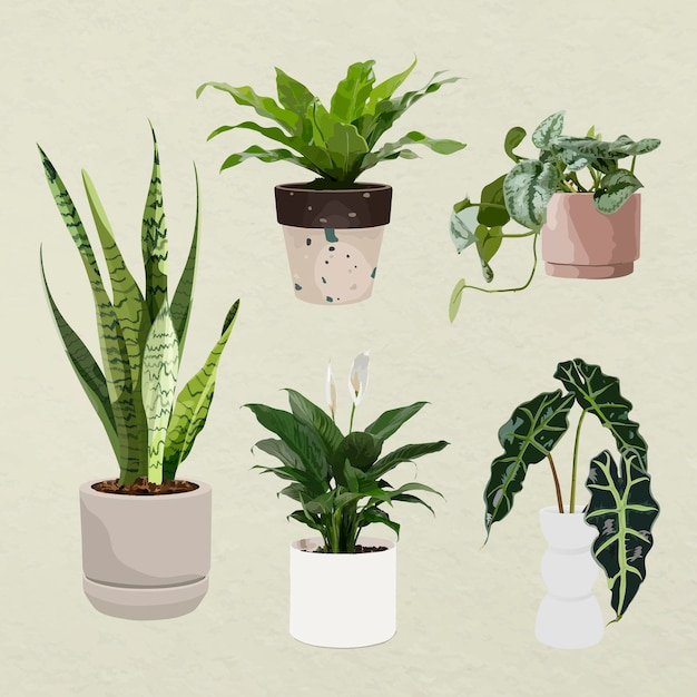 Arte de vector de planta, planta de interior en macetas