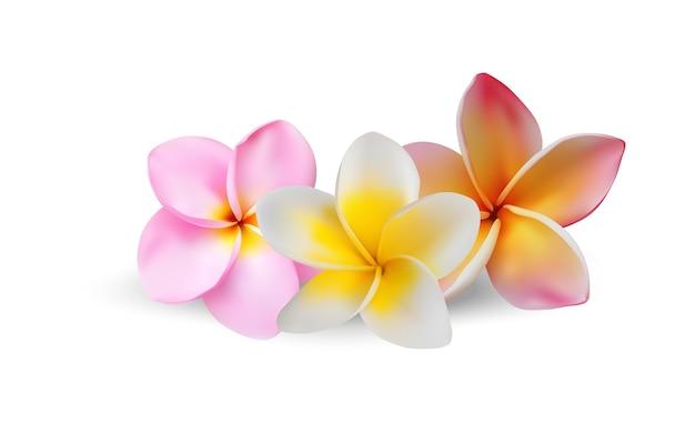 Arte de vector realista de flor de plumeria