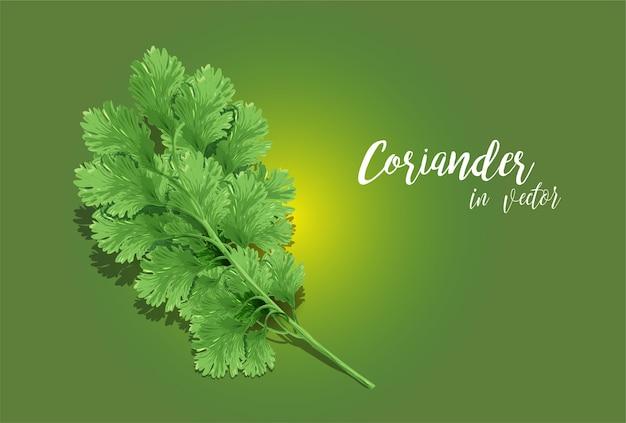 Arte vectorial de cilantro