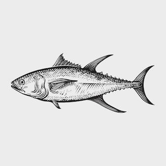 Atún mariscos dibujados a mano ilustraciones estilo grabado.