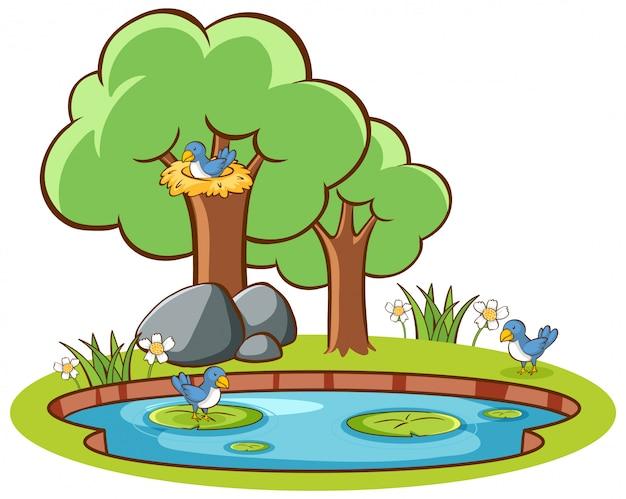 Aves aisladas y estanque