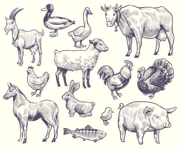 Aves y animales de granja dibujados a mano