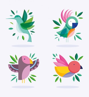 Aves diferente follaje naturaleza fauna flora diseño