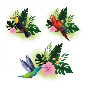 Aves exóticas y fauna tropical.