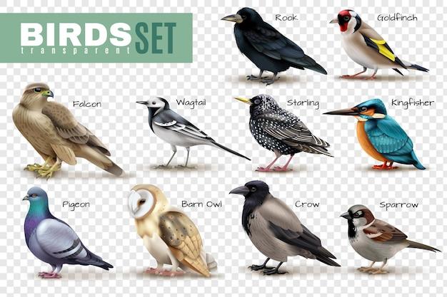 Aves en superficie transparente conjunto de imágenes de aves aisladas con varias especies e ilustración de leyendas de texto editables