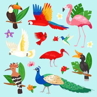 Aves tropicales loro exótico o flamenco y pavo real con ilustración de hojas de palma