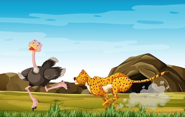 Avestruces de caza de leopardo en personaje de dibujos animados en el fondo del bosque