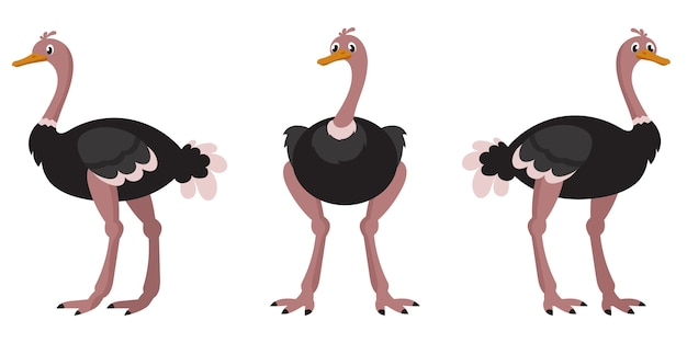 Avestruz en diferentes poses.