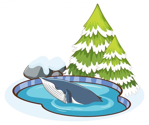 Ballena azul en el estanque