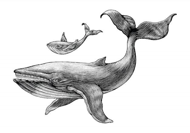 Ballena grande y ballena pequeña dibujo a mano ilustración vintage grabado