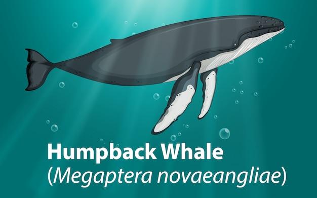 Ballena jorobada en el océano profundo
