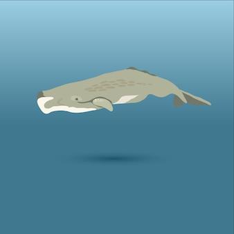 Ballenas del mundo / orca asesina / esperma pigmeo, bowhead, derecha pigmea, piloto de aletas largas
